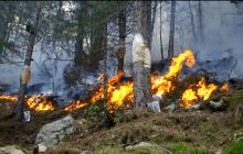 Projet Feux de forêt